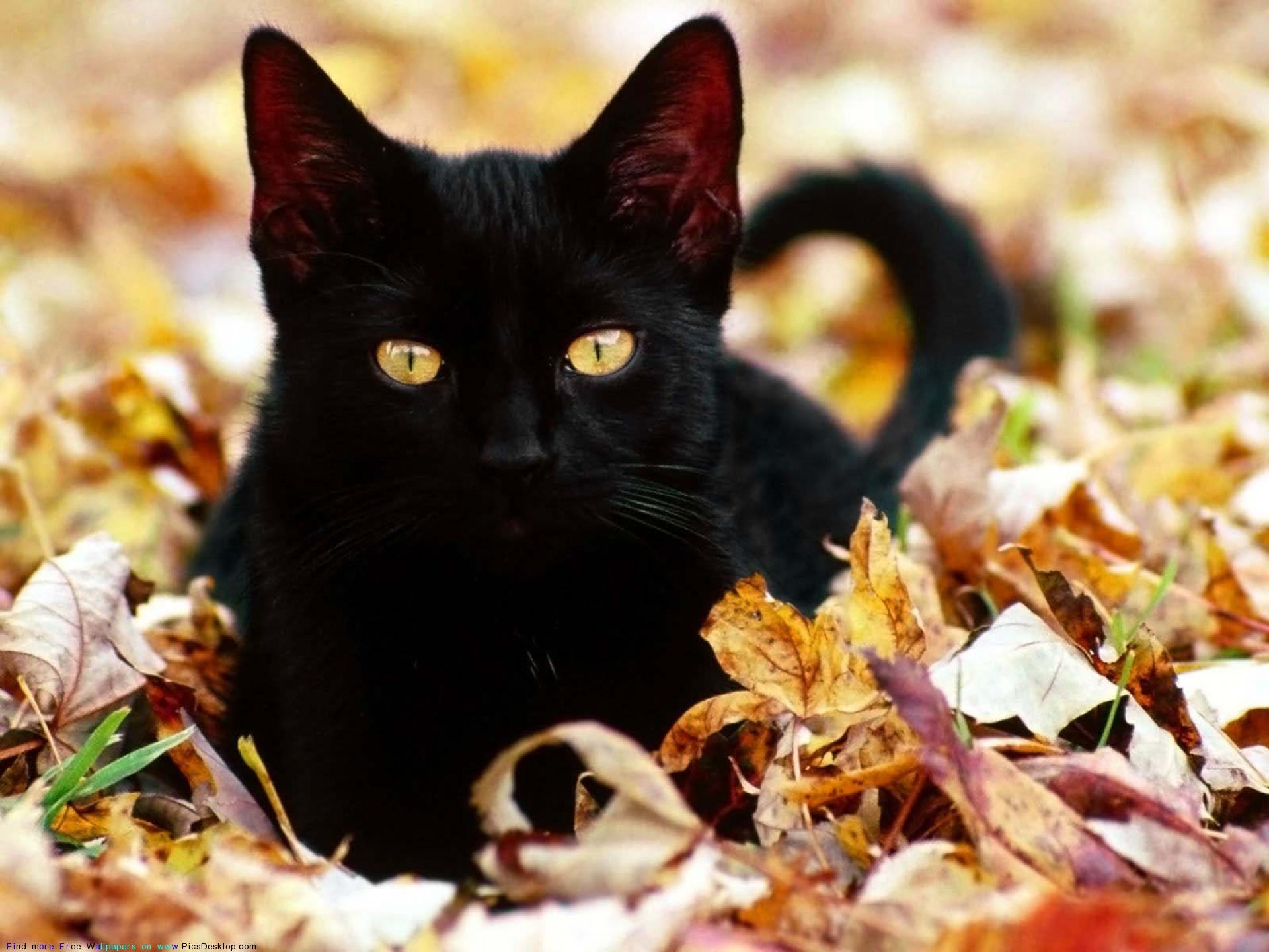 Фото кошек-9.jpg.