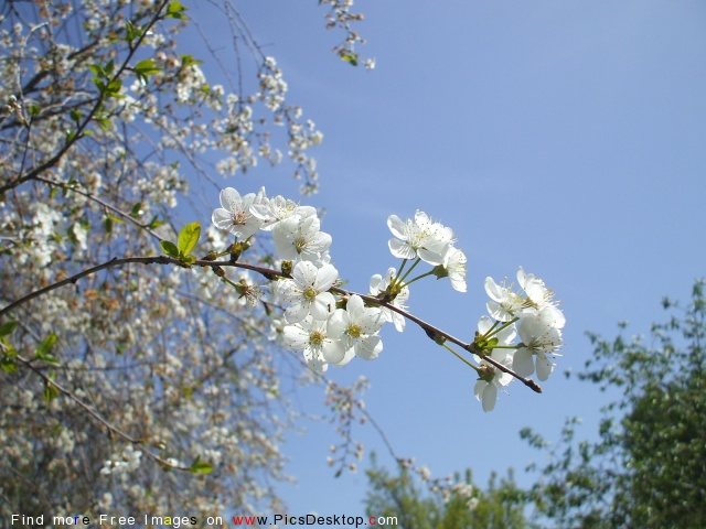 Nature Springtime Free Desktop Wallpapers For PC & Mac #148