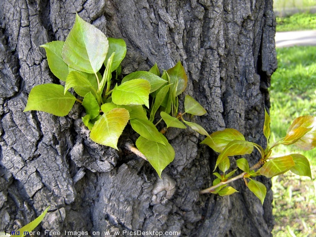 Nature Springtime Free Desktop Wallpapers For PC & Mac #165