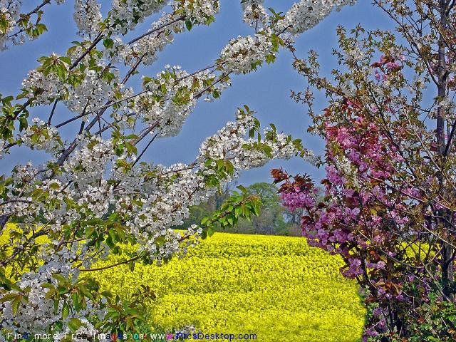 Nature Springtime Free Desktop Wallpapers For PC & Mac #86
