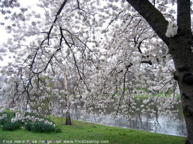 Nature Springtime Free Desktop Wallpapers For PC & Mac #96