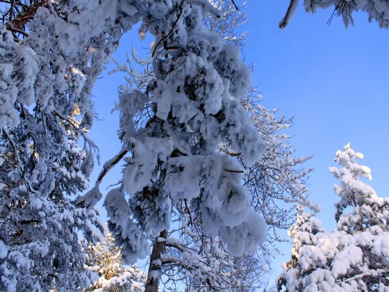 Nature - Winter Free Desktop Wallpapers for PC amp; Mac #28