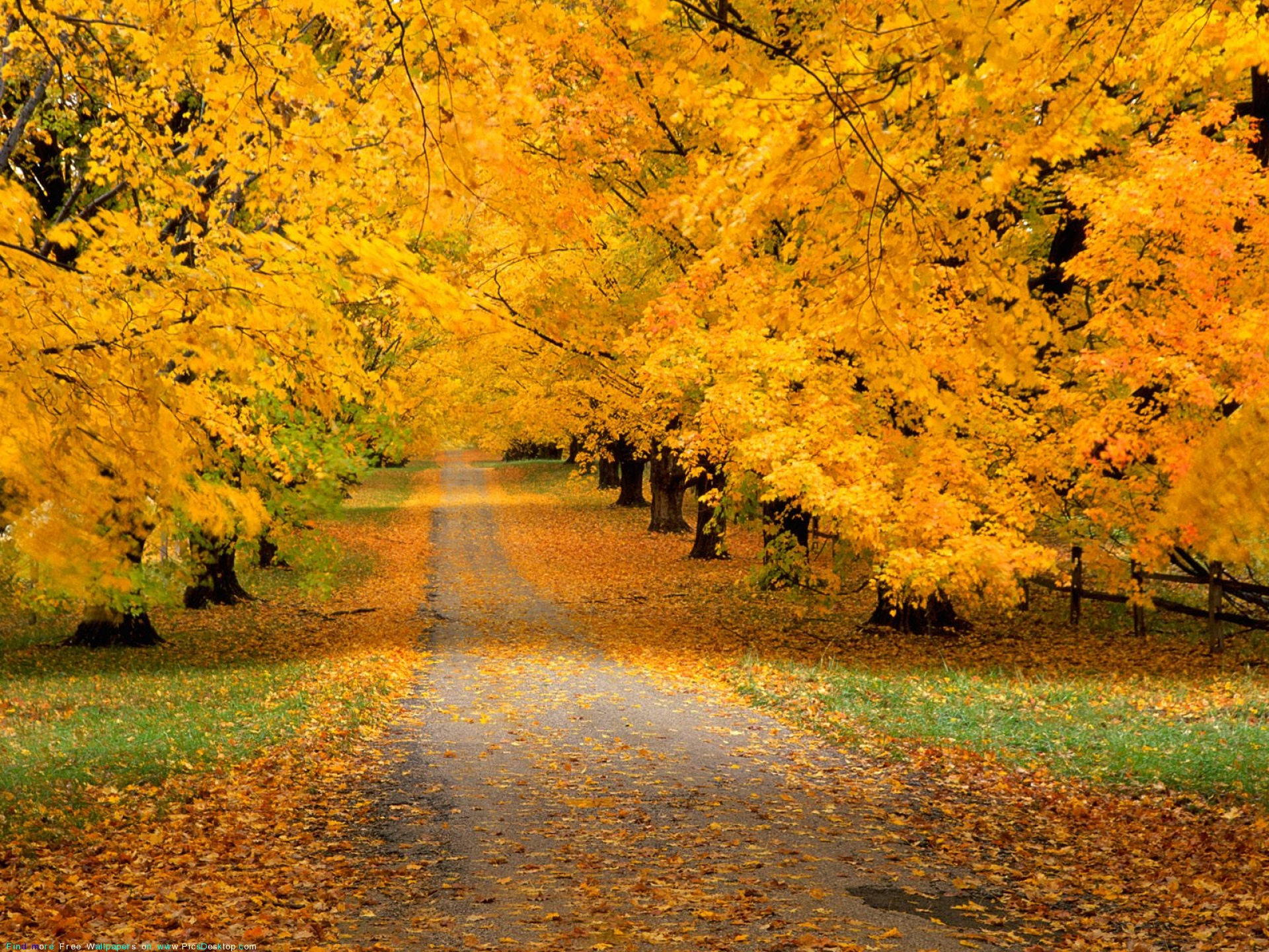 Nature wallpaper autumn