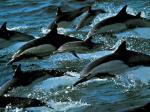 Ocean Life Free Desktop Backgrounds collection.