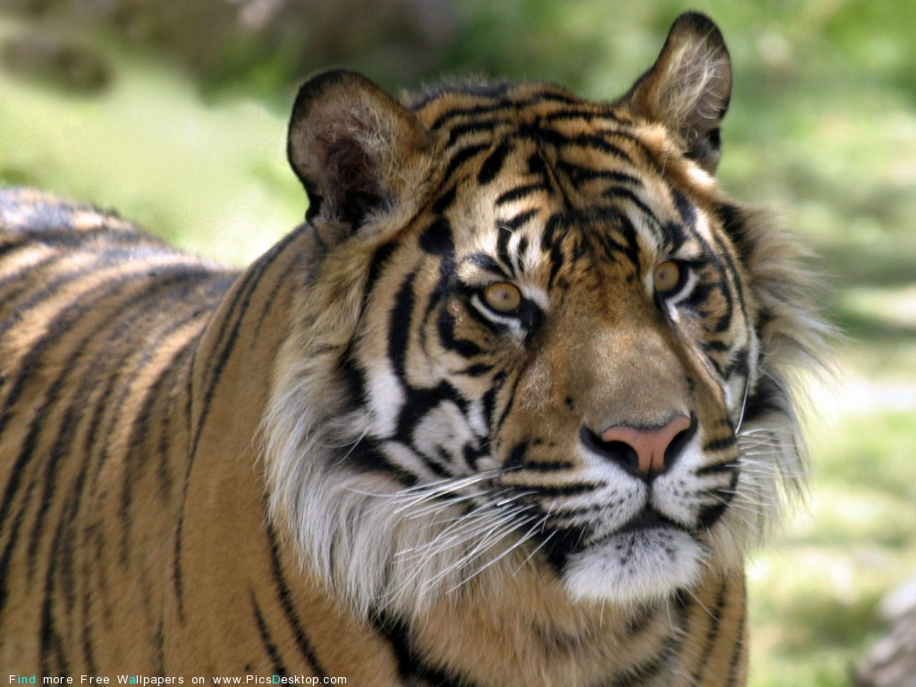 animals wild desktop wallpaper collection 139
