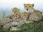 Animals - Wild Desktop Wallpaper collection.