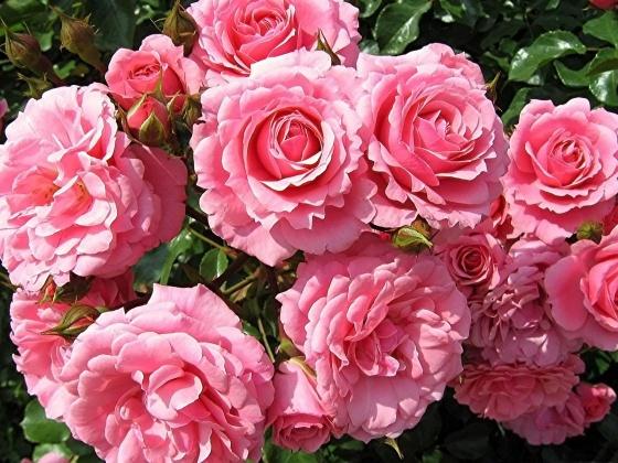 اجمل صور الازهار جزء 1 www.PicsDesktop.com_