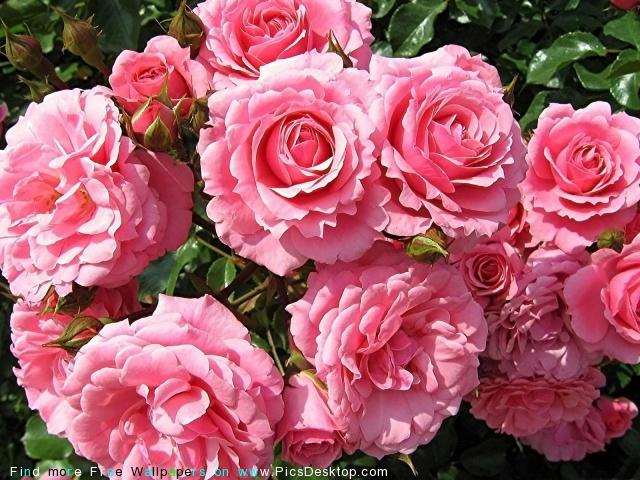 http://picsdesktop.com/flowers/640x480/www.PicsDesktop.com_109.jpg